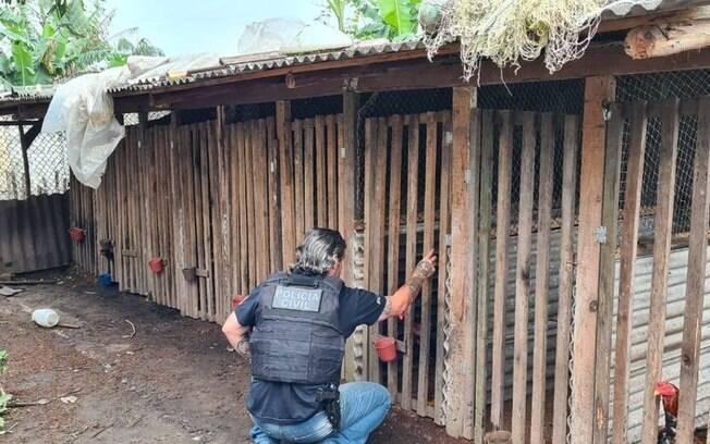 Polícia faz operação em três estados contra suspeitos de promover rinhas de galo