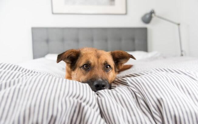 Cães podem se sentir mais estressados após o fim do isolamento sozinhos em casa