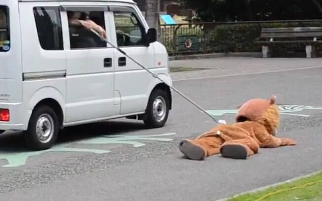 Funcionário se vestiu de leão para simular fuga de animal