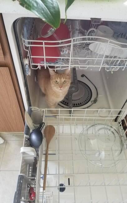 Gato amarelo dentro de máquina de lavar louça