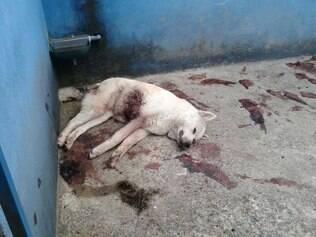 Cadela Anilha era mascote da academia, mas foi encontrada morta no local há cerca de uma semana