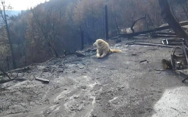Cadela fica quase um mês esperando sua dona aparecer em meio aos destroços da casa incendiada