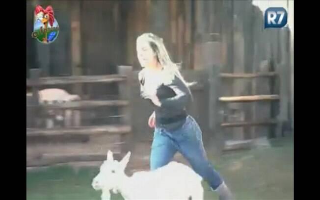 Joana corre atrás de cabra para ajudar Thiago
