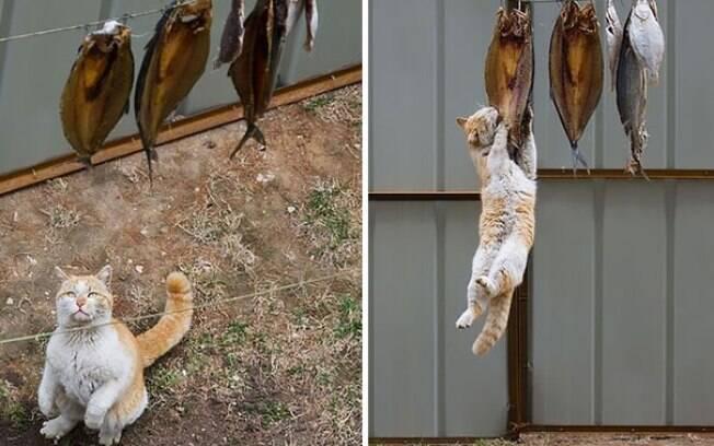 Esses animais de estimação foram pegos no flagra pelo seus donos