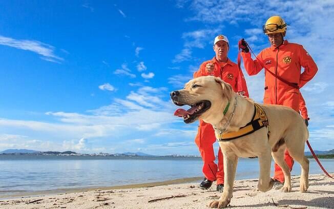 cães podem auxiliar na subnotificação do novo coronavírus