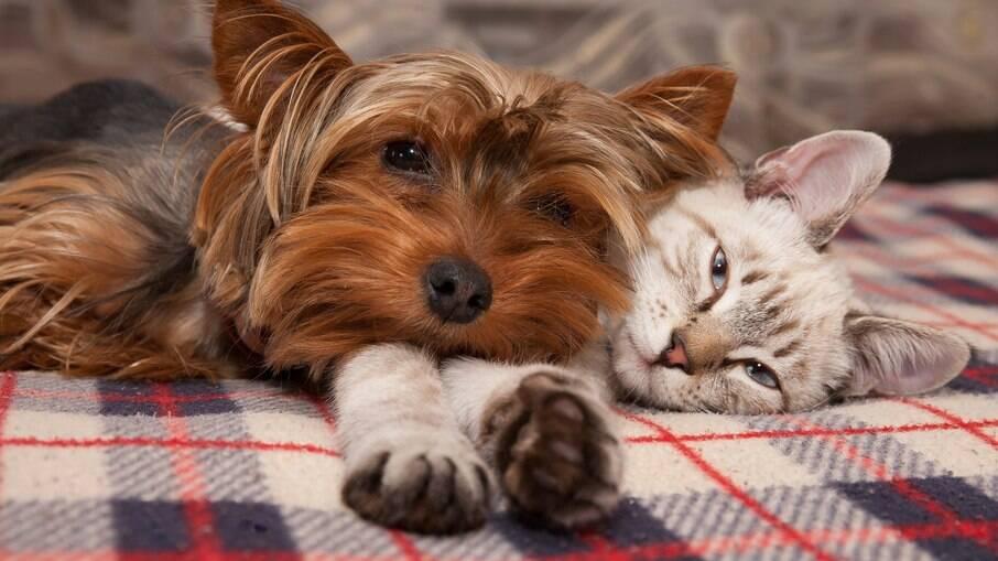 A vermifugação é imprescindível para manutenção da saúde e bem-estar dos cães e também dos gatos