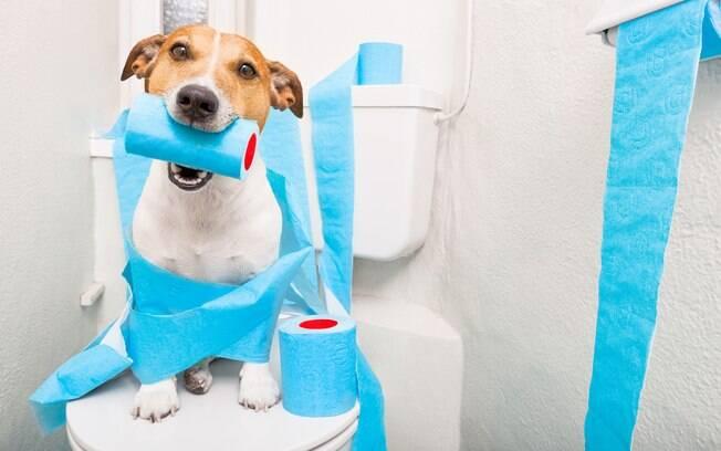 Confira alguns dos erros mais comuns cometidos pelos tutores durante o treinamento e descubra se está ensinando corretamente o cachorro a fazer xixi no lugar certo