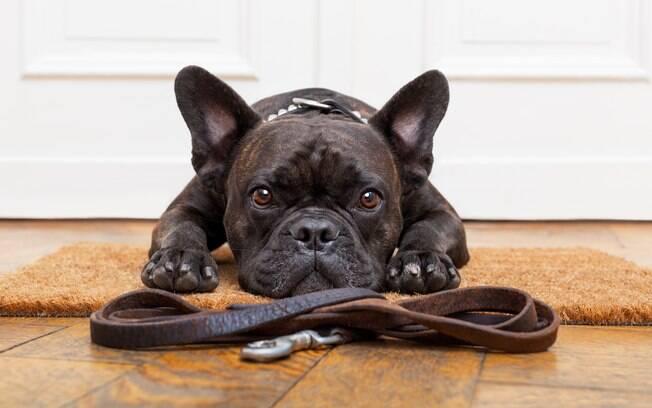 A escolha da coleira ideal para o cão irá depender de suas características comportamentais