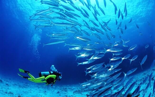 Mergulhar na Grande Barreira de Corais, na Austrália, é experiência única