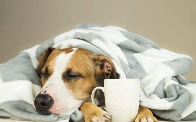 Cachorro com febre é um sinal de alerta, pois indica que algo não vai bem com sua saúde