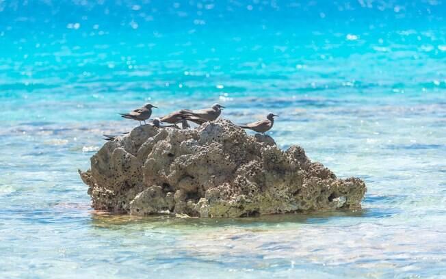 Tem uma ilha no Tahiti que é conhecida por ser um ótimo observatório de pássaros e também de espécies marinhas