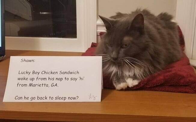 gato ao lado de placa