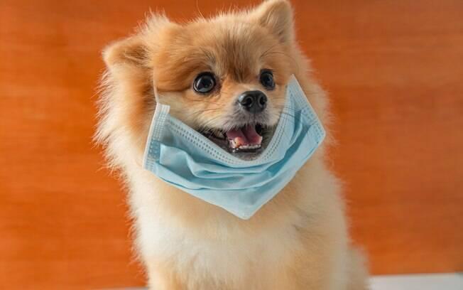 Animais de estimação não são contaminados com o novo coronavírus e não precisam usar máscara