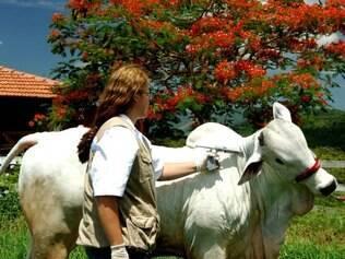 Certificação abre novas perspectivas para o comércio interno e externo de produtos pecuários
