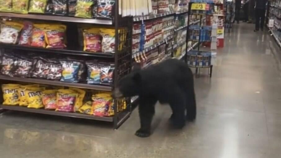 O animal saiu do local assim que a polícia local chegou ao comércio para resgatá-lo