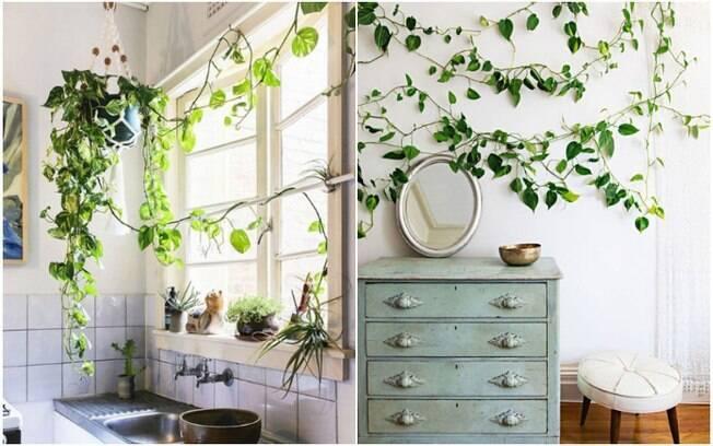 A jiboia é uma das plantas para ter em casa