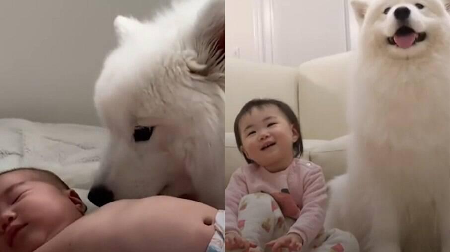 Cachorrinha toma conta de bebê o dia todo