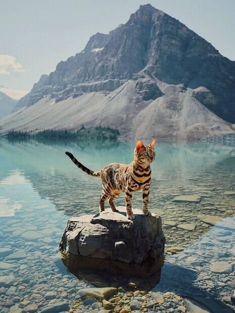 Conheça a gata viajante que sabe aproveitar a vida como ninguém