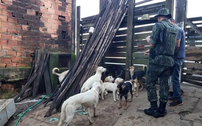 Foram encontrados 18 cães adultos e 3 filhotes