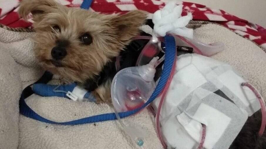 Macy teve ferimentos graves e precisou passar por cirurgia
