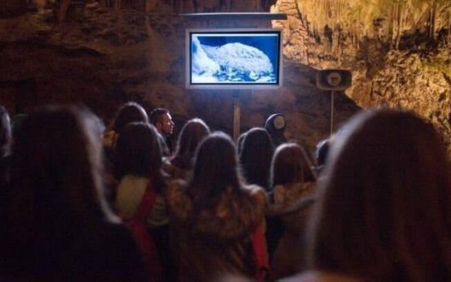 Visitantes podem ver a fêmea por uma câmera infravermelha