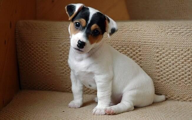 Cachorro fofinho.