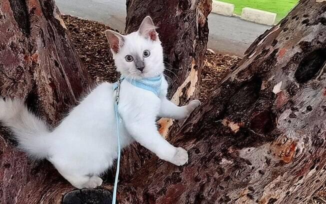 Filhote de gato que encontrou seringa