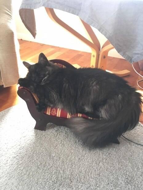 Mini sofá para gato