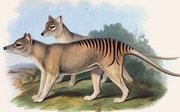A misteriosa espécie que segue 'reaparecendo' após ser extinta