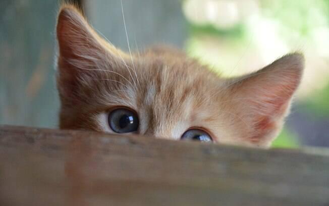 Alguns gatos não fazem xixi na caixinha de areia e dão muita dor de cabeça