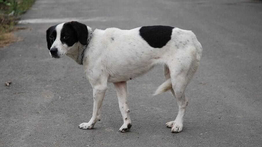 Um animal perdido pode estar assustado, tome cuidado para que ele não corra em direção aos carros