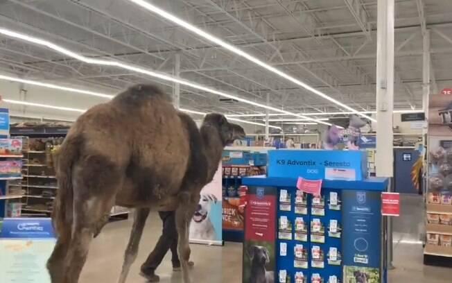 Camelo é o animal exótico que surpreendeu os clientes do pet shop