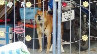 Cão comove vizinhos ao esperar dono que morreu vítima da Covid