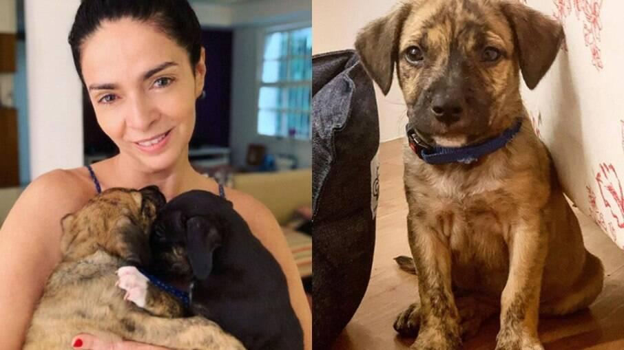 Claudia Ohana e os cães devolvidos