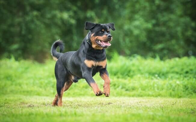 Rottweiler feriu a criança no rosto, no tórax e na cintura.