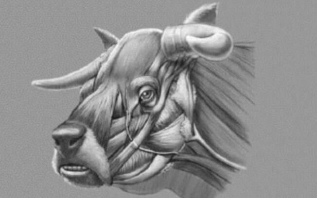 Estudos sobre vaca apelidada de Niata por Charles Darwin em 1840 foram retomados, trazendo à tona feição do animal