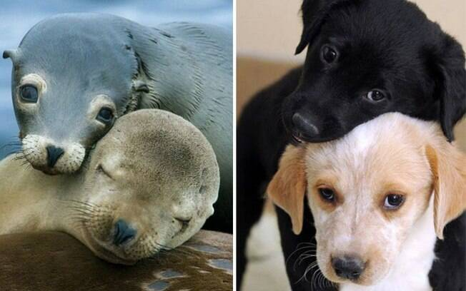 Cachorros e foquinhas em momentos de carinho.