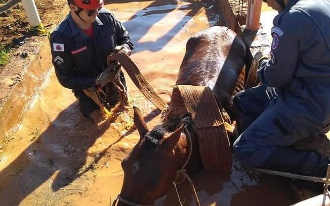 Cavalo é socorrido por bombeiros após tragédia com desabamento da barragem da Vale