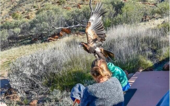 Criança estava com a mãe em reserva ecológica quando chegou a ser carregada pela águia
