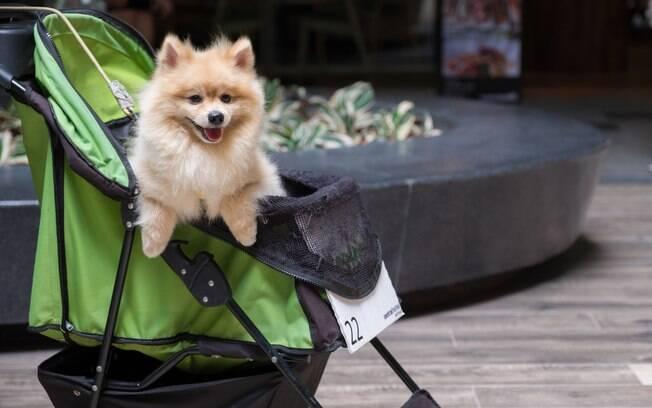 Carrinho de bebê para cachorro é utilizado nas ruas