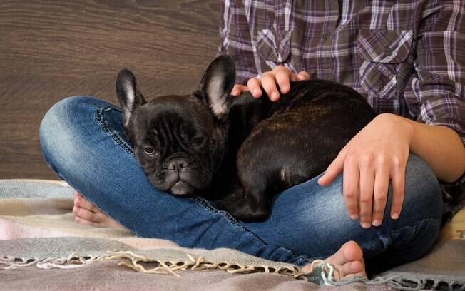 Cães com reumatismo costumam ficar mais quietos e apáticos