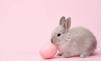 Veterinárias alertam: dar coelhos na Páscoa pode ser um problema