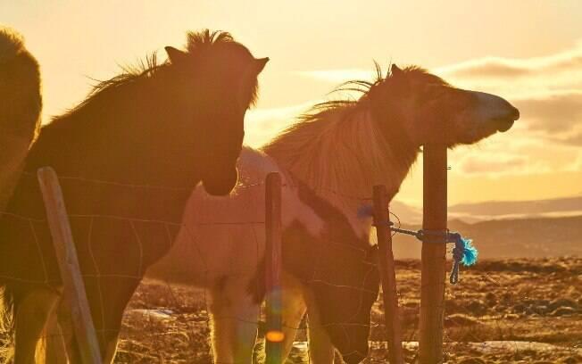 Cavalos no coração da Islândia