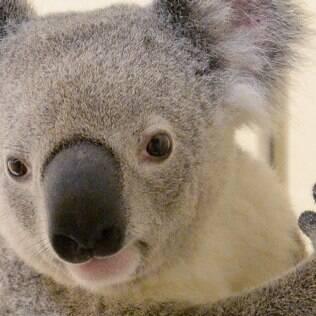 Hospitais especializados está salvando os animais (foto de arquivo)