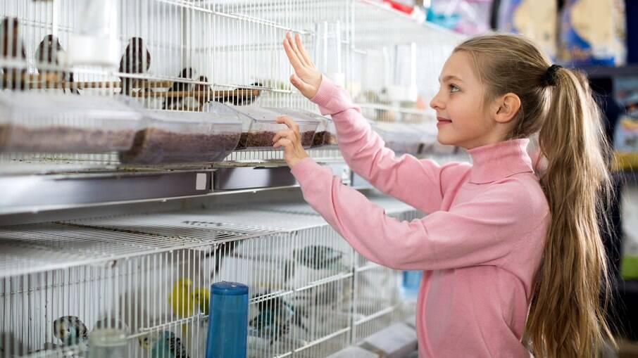 Algumas crianças tem preferência por pássaros na hora de escolher um animalzinho