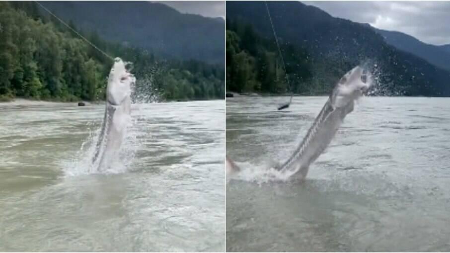 Peixe pulou para pegar a isca e surpreendeu pescadores