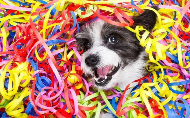 É preciso conhecer o temperamento do seu pet para saber se ele ficará confortável em aglomerações de pessoas como o carnaval