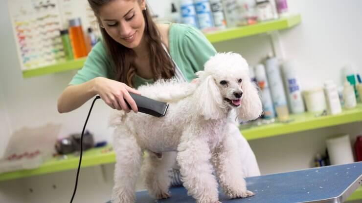 Saiba como tosar cachorro em casa de maneira correta - Dicas - iG 5d5905105296