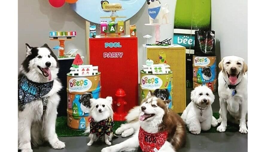 Assim como as pessoas, os cães também comemoram com seus amigos peludos