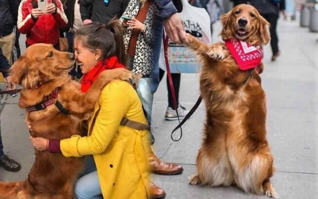 Essa Golden Retriever distribui abraços na rua e arrasa no Instagram